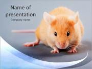 Mouse I pattern delle presentazioni del PowerPoint