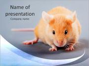 Mouse Modelos de apresentações PowerPoint