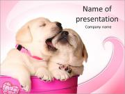 Labrador Puppy PowerPoint Templates