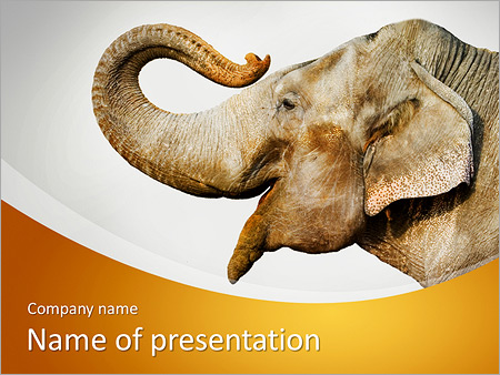 Smiling Elephant Powerpoint Template Backgrounds Id 0000007456