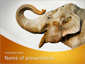 Smiling Elephant PowerPoint Template