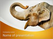Smiling Elephant PowerPoint Templates