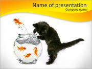 Kitty With Fish PowerPoint Templates