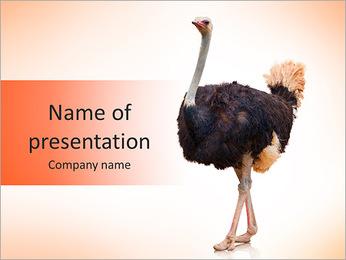 Big Ostrich PowerPoint Template