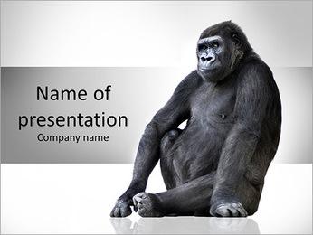 Huge Gorilla PowerPoint Template