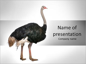 Ostrich Farm PowerPoint Template