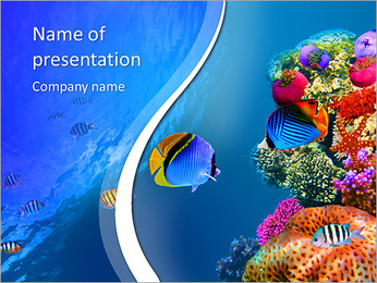 Threadfin butterflyfish (Chaetodon auriga), Red Sea, Egypt PowerPoint Template