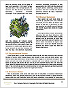 Ecology In Danger Word Template - Page 4