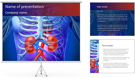 Kidney Function PowerPoint Template