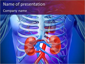 Kidney Function PowerPoint Template - Slide 1
