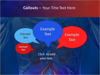 Kidney Function PowerPoint Template - Slide 53