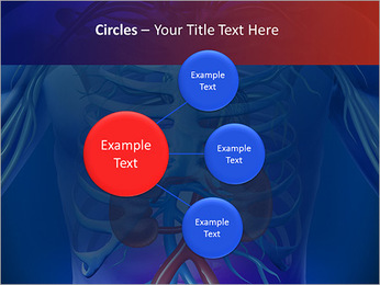 Kidney Function PowerPoint Template - Slide 59