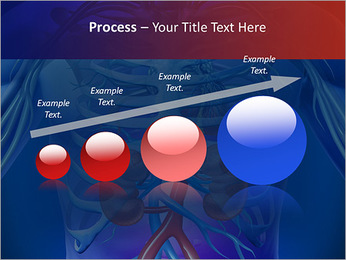 Kidney Function PowerPoint Template - Slide 67