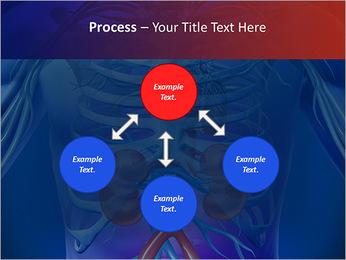 Kidney Function PowerPoint Template - Slide 71