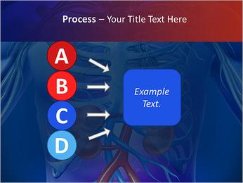 Kidney Function PowerPoint Template - Slide 74