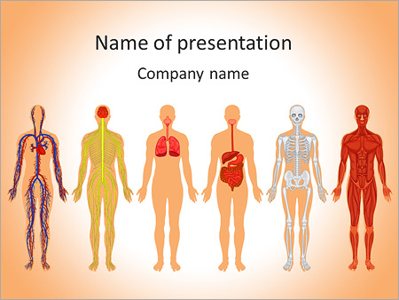 learn human anatomy powerpoint template & backgrounds id, Modern powerpoint