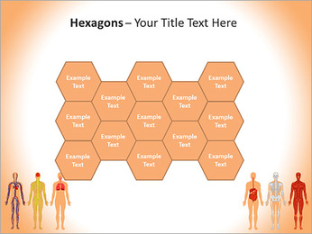 Learn Human Anatomy PowerPoint Template - Slide 24