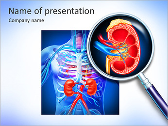 Kidney PowerPoint Template - Slide 1