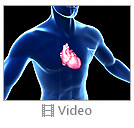 Heart Anatomy Video