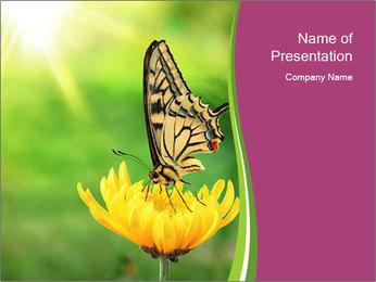 0000071081 PowerPoint Template - Slide 1
