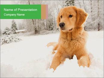 0000071238 PowerPoint Templates - Slide 1