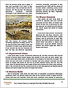 0000071376 Word Template - Page 4