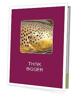 0000071389 Presentation Folder