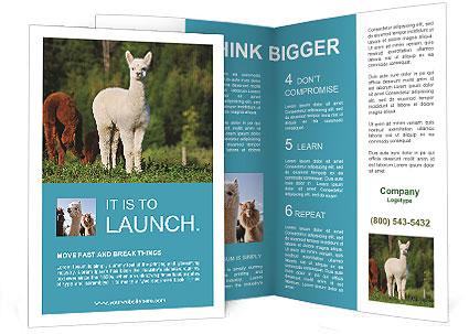 0000071447 Brochure Template