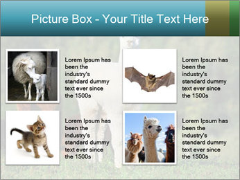 0000071447 PowerPoint Templates - Slide 14