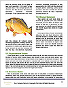 0000071470 Word Templates - Page 4