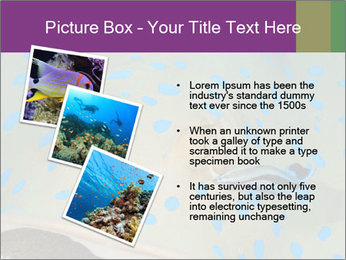 0000071506 PowerPoint Template - Slide 17