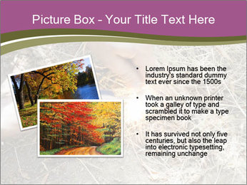 0000071558 PowerPoint Template - Slide 20