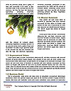 0000071562 Word Template - Page 4