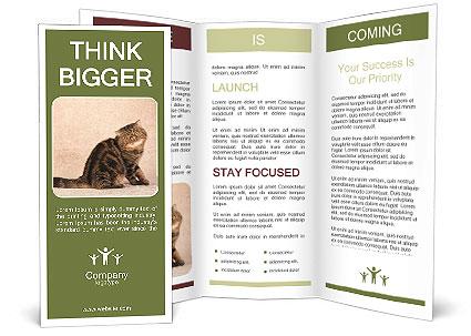 0000071593 Brochure Template