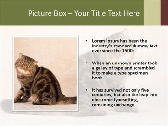 0000071593 PowerPoint Template - Slide 13