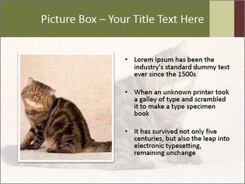 0000071593 PowerPoint Templates - Slide 13