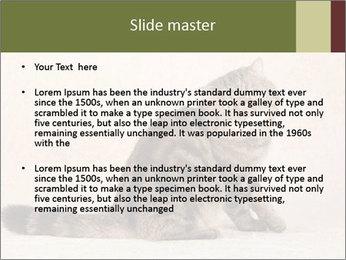 0000071593 PowerPoint Templates - Slide 2