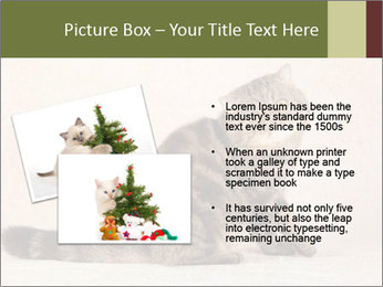 0000071593 PowerPoint Template - Slide 20