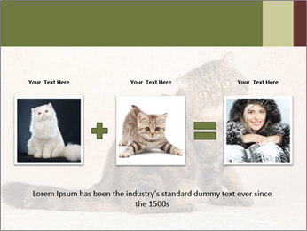0000071593 PowerPoint Templates - Slide 22