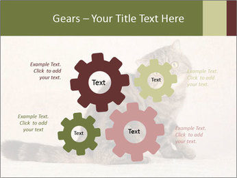 0000071593 PowerPoint Templates - Slide 47