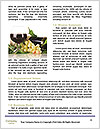 0000071669 Word Templates - Page 4