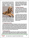 0000071689 Word Templates - Page 4