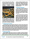 0000071700 Word Template - Page 4
