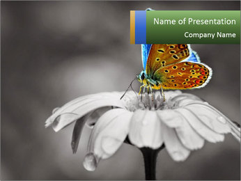 0000071709 PowerPoint Templates - Slide 1