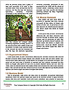 0000071728 Word Template - Page 4