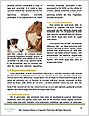 0000071761 Word Templates - Page 4