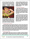 0000071771 Word Templates - Page 4