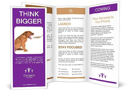 0000071773 Brochure Templates