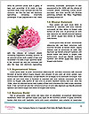 0000071776 Word Templates - Page 4