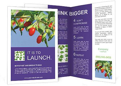 0000071799 Brochure Template